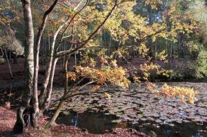 Heath Pond  POI B