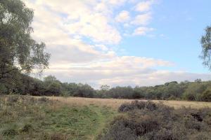 Forest Heath