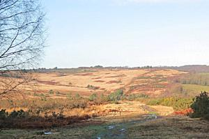 Ashdown Forest, just after the beginning of the walk