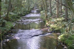 March Burn at Healey Mill